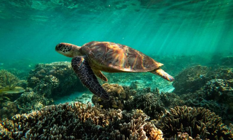 The Great Barrier Reef has lost half of its coral reefs