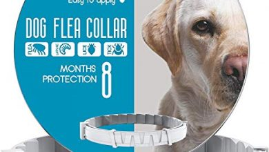 Photo of 30 Flea Collar For Dogs Reviews With Well Researched Buying Guide