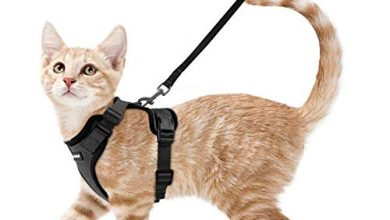 Photo of 30 Cat Harness Reviews With Well Researched Buying Guide