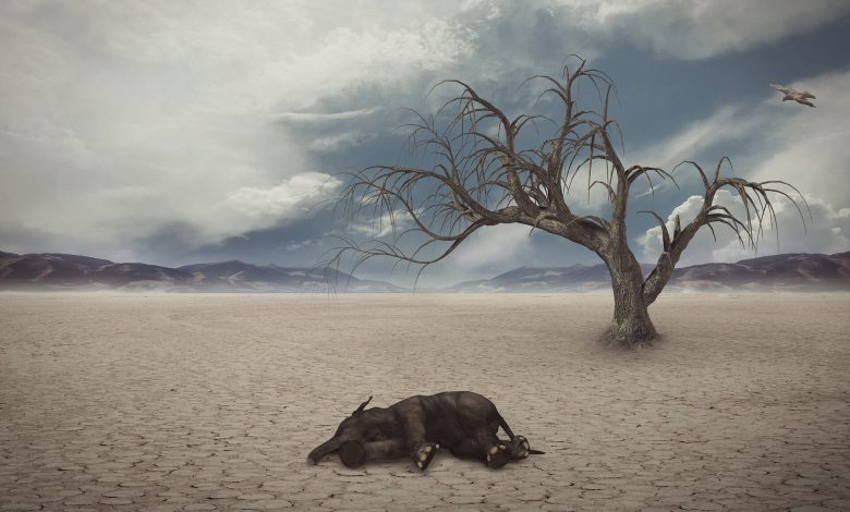 Mass extinctions of animals that live on Earth occur in a cycle of 27 million years