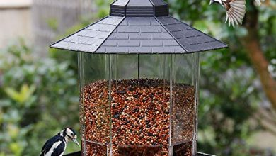 Photo of 30 Bird Feeder Reviews With Well Researched Buying Guide