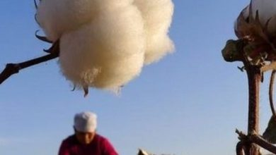 Photo of The United States bans importing cotton products from Xinjiang