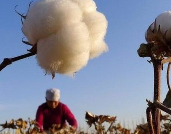 The United States bans importing cotton products from Xinjiang