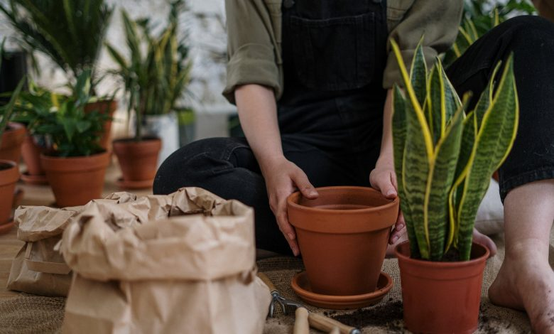 A houseplant that reduces anxiety and makes the air fresh and clear