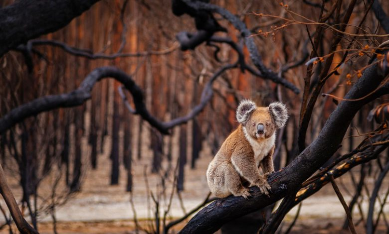 Catastrophe Australia lost billions of animals