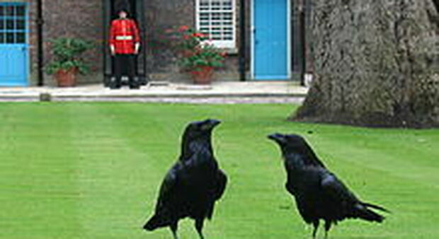 Crow Merlin disappears from the Tower of London, and the kingdom fears a tragic prophecy