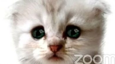 Photo of Lawyer forgets the filter in Zoom, and a video conference judge sees it as a talking cat