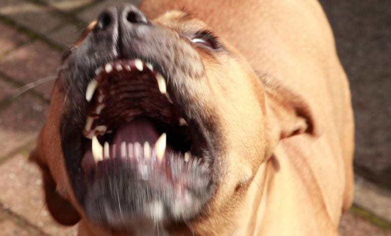 A girl dies after being attacked by her dog in her sleep