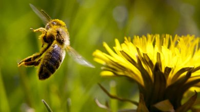 Photo of Allergy season lasts longer