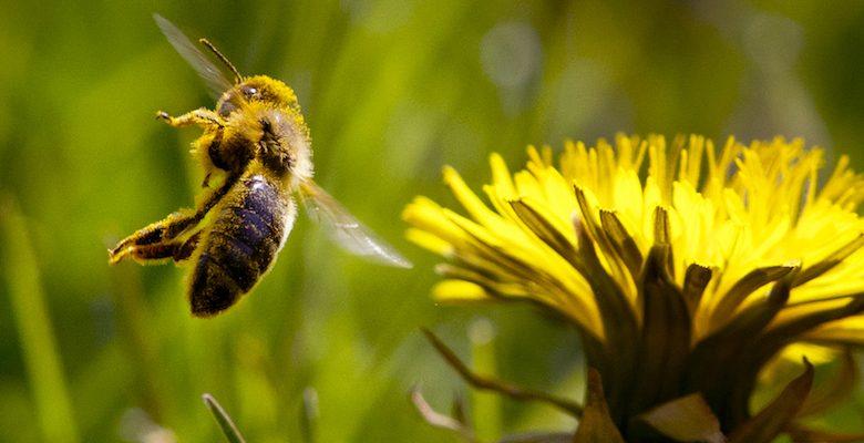 Allergy season lasts longer
