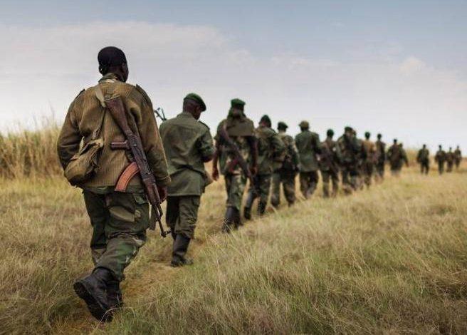Attack in Congo, Virunga Park from gorilla paradise to gunpowder- Corriere.it