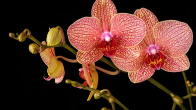 Photo of Beware of the mistake that should not be underestimated to keep an orchid healthy