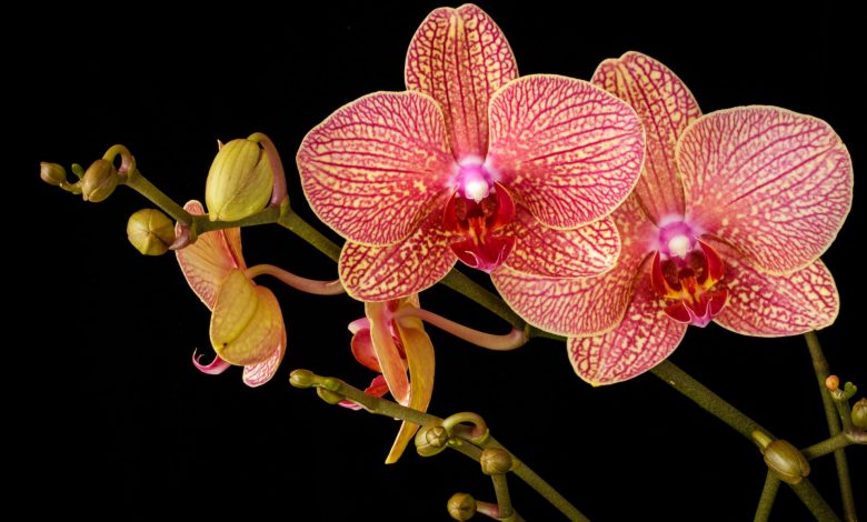 Beware of the mistake that should not be underestimated to keep an orchid healthy