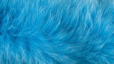 Photo of Blue dogs spotted in Russia: possible causes of abnormal coloration