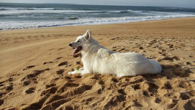 Photo of The beautiful dog, white as snow and easy to train