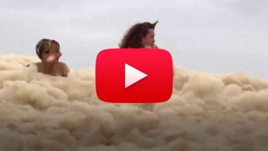 Photo of The dog disappears under the foam that floods the shore.  Video »ILMETEO.it