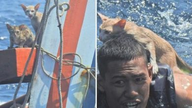Photo of Cats abandoned on a sinking ship, a marine takes them to safety by swimming Corriere.it