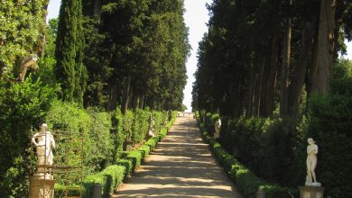 Photo of There are plants that are perfect for our garden paths and structures in between colors and scents
