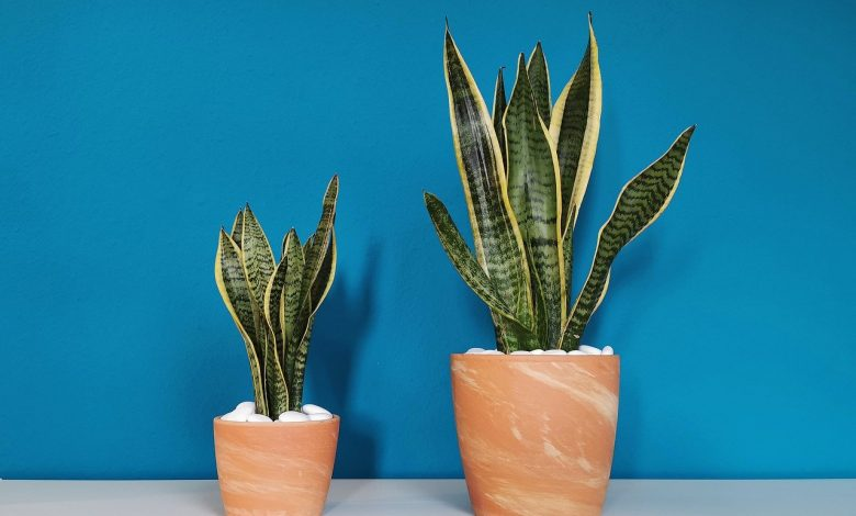 Unveiled 3 mini houseplants that improve and purify the air we breathe