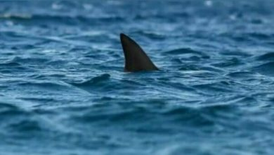 Photo of Australia, you go to bathe and a shark dies in pieces