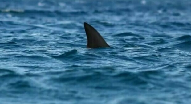 Australia, you go to bathe and a shark dies in pieces