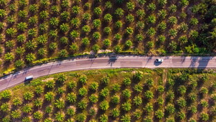 ESG investments, when financing goes hand in hand with sustainability