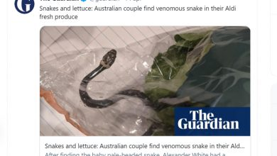 Photo of An Australian couple finds a venomous snake in a salad bag