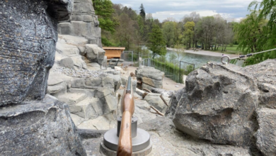 "Photo of Bern, in the zoo fake ""shoot"" antler rifles: removed after controversy"