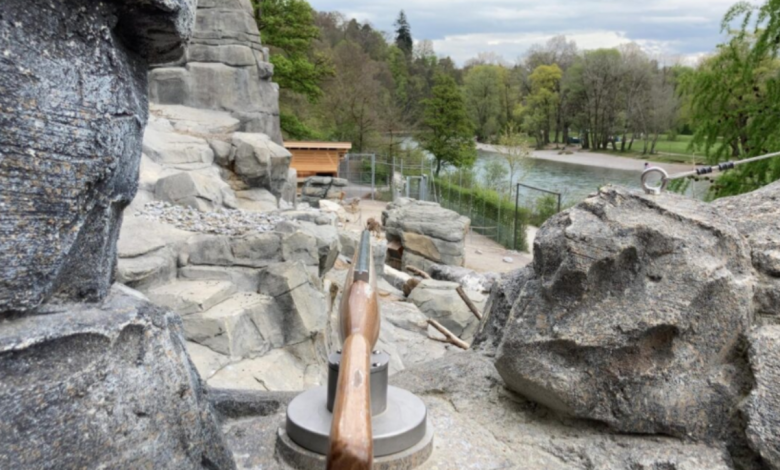 """Bern, in the zoo fake """"shoot"""" antler rifles: removed after controversy"""