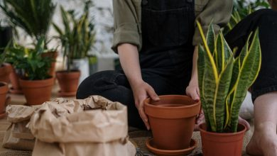 Photo of How to choose the best soil for each type of plant and ensure its flowering and growth