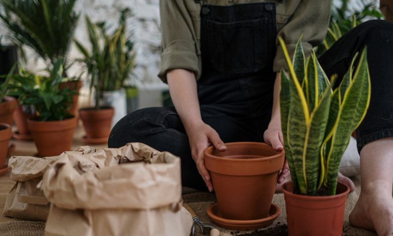 How to choose the best soil for each type of plant and ensure its flowering and growth