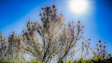 """Photo of """"In the spring, low vitamin D is used to arm the defenses."""""""