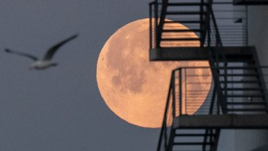 Photo of It's Superluna's Pink Night, and here's how and when to see it in Italy