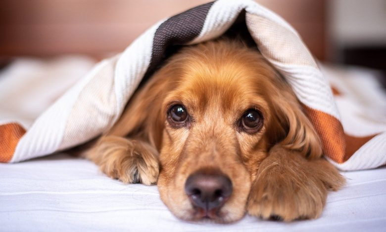 No one will give this very common food to their dog but it brings enormous benefits to their health