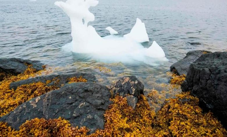 The melting of polar ice caps in the past has been linked to a sea rise 10 times faster than it is today