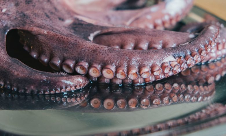 These are Grandma's infallible secrets of cooking the octopus to perfection and making it tender