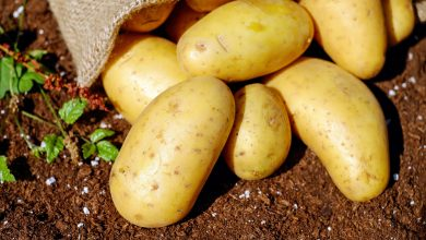Photo of Very simple tricks to peel hot potatoes in two minutes without burning your fingers