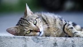 Woman dies, leaves 15 cats: after almost two years the cats are adopted