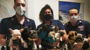 Illegal transport of 10 dogs to a dog by truck, rescued by traffic police in Fano