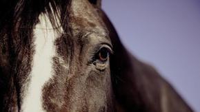 Jockey burns a horse after training, an investigation into Pisa