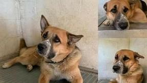 A newly adopted dog is left alone on the first day in his new home, escapes and dies after being hit by a train.