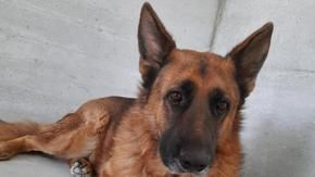 From Lampedusa to Piedmont: The story of Rex's happy ending, the dog was adopted thanks to Lazamba