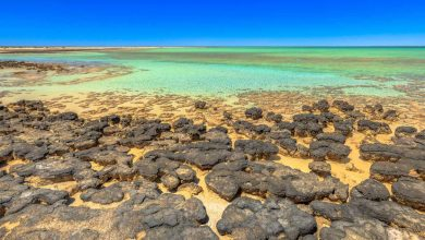 Photo of There is a place in Australia that reveals what life was like 3.5 billion years ago