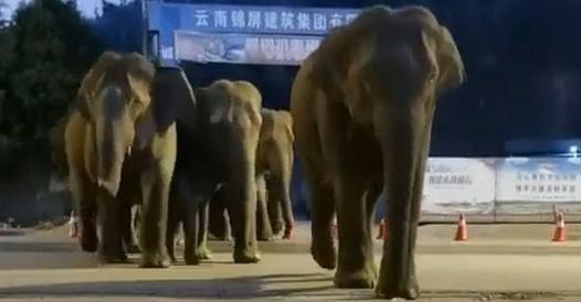 China, elephant descent frightens Kunming's 7 million residents - Corriere.it