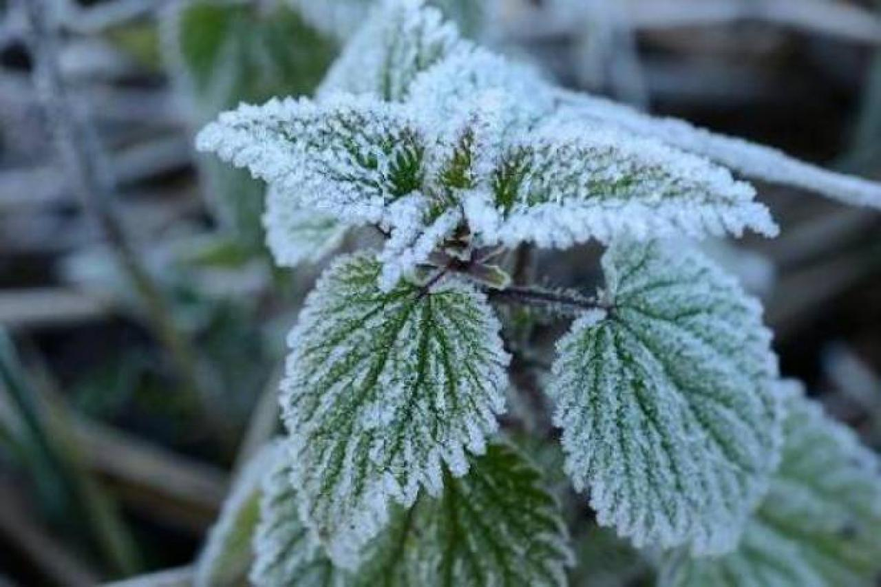 Cold and frost in southwestern Australia غرب