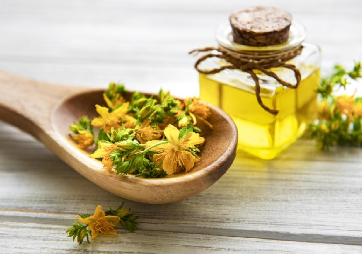 Photo of Discover the different healing properties of St. John's wort