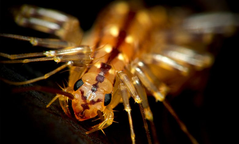 Never kill this insect because it can be really useful around the house