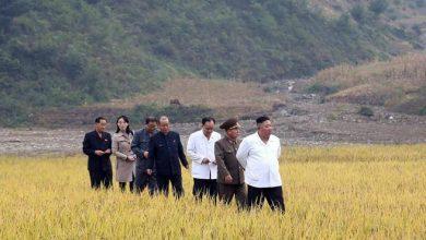 Photo of North Korea Kim lost the battle of wheat – Corriere.it