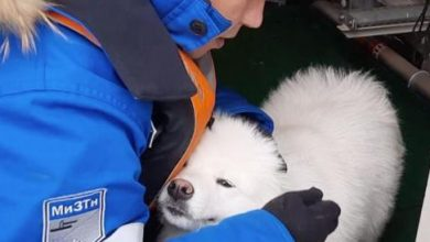 Photo of Russia, sailors rescue a Samoan puppy that has been wandering in the ice for a week – Corriere.it
