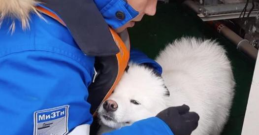 Russia, sailors rescue a Samoan puppy that has been wandering in the ice for a week - Corriere.it